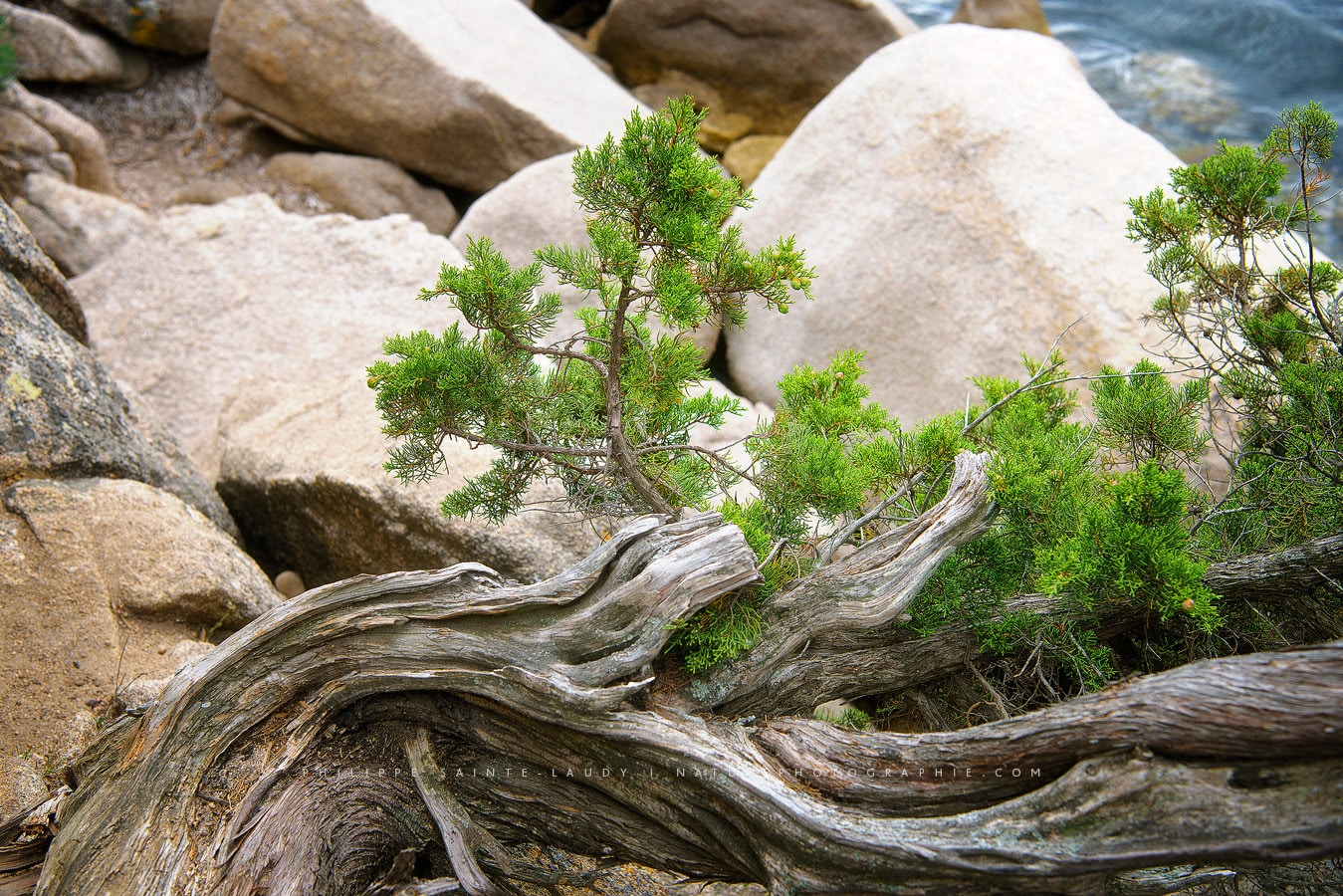 Natures Details