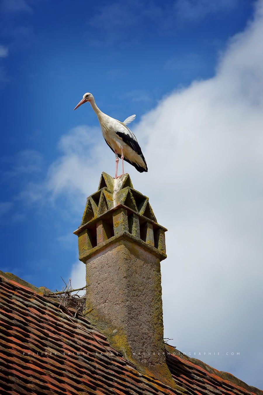 Stork on hold