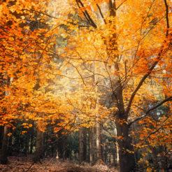 C'est l'automne dans les Vosges