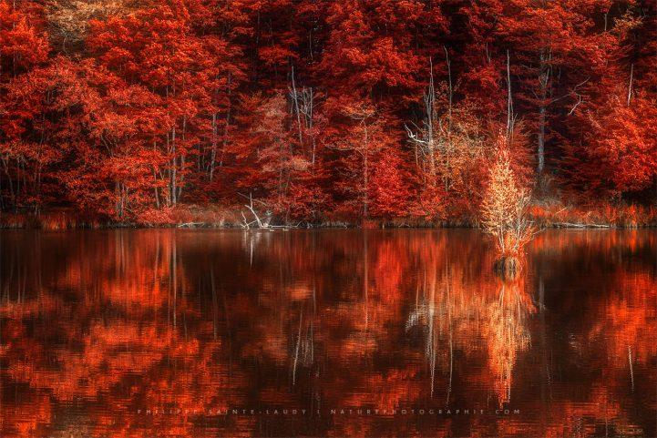 Forêt rouge en automne aux mille étangs