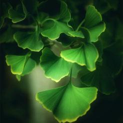 Un peu de vert avant l'automne