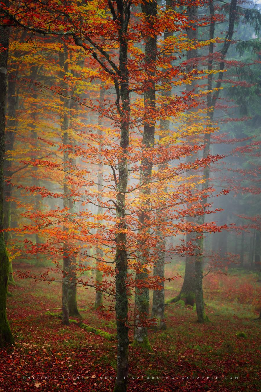Autumn's End