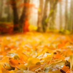 Paintography d'automne