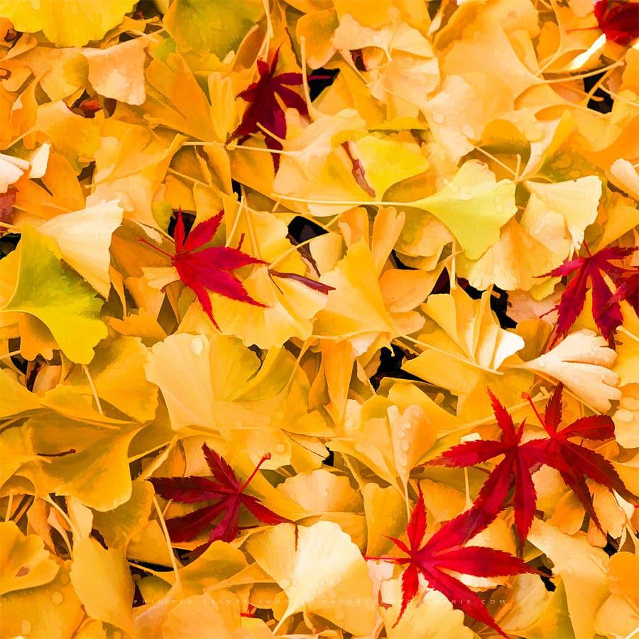 Fall Range