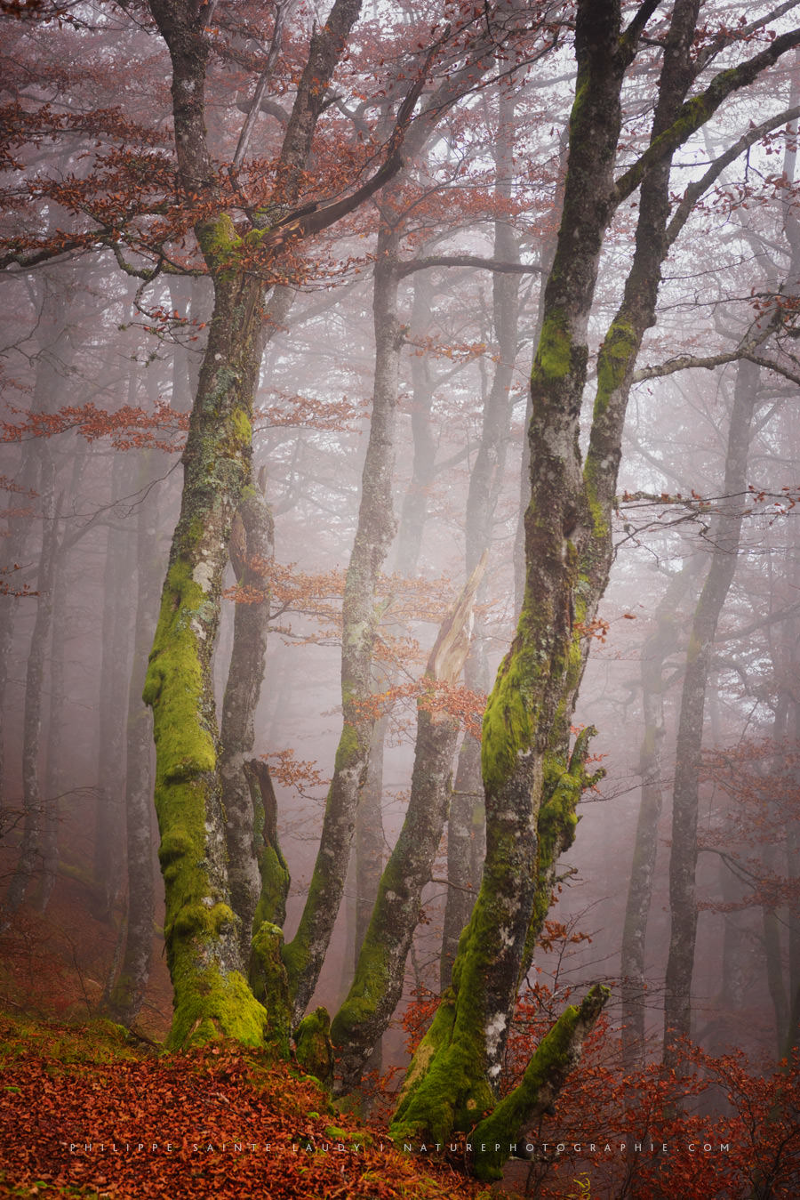 Forest Fog