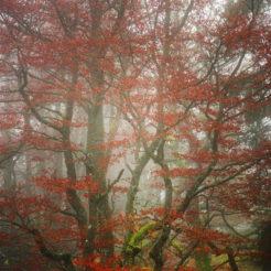 Photos de forêts en automne