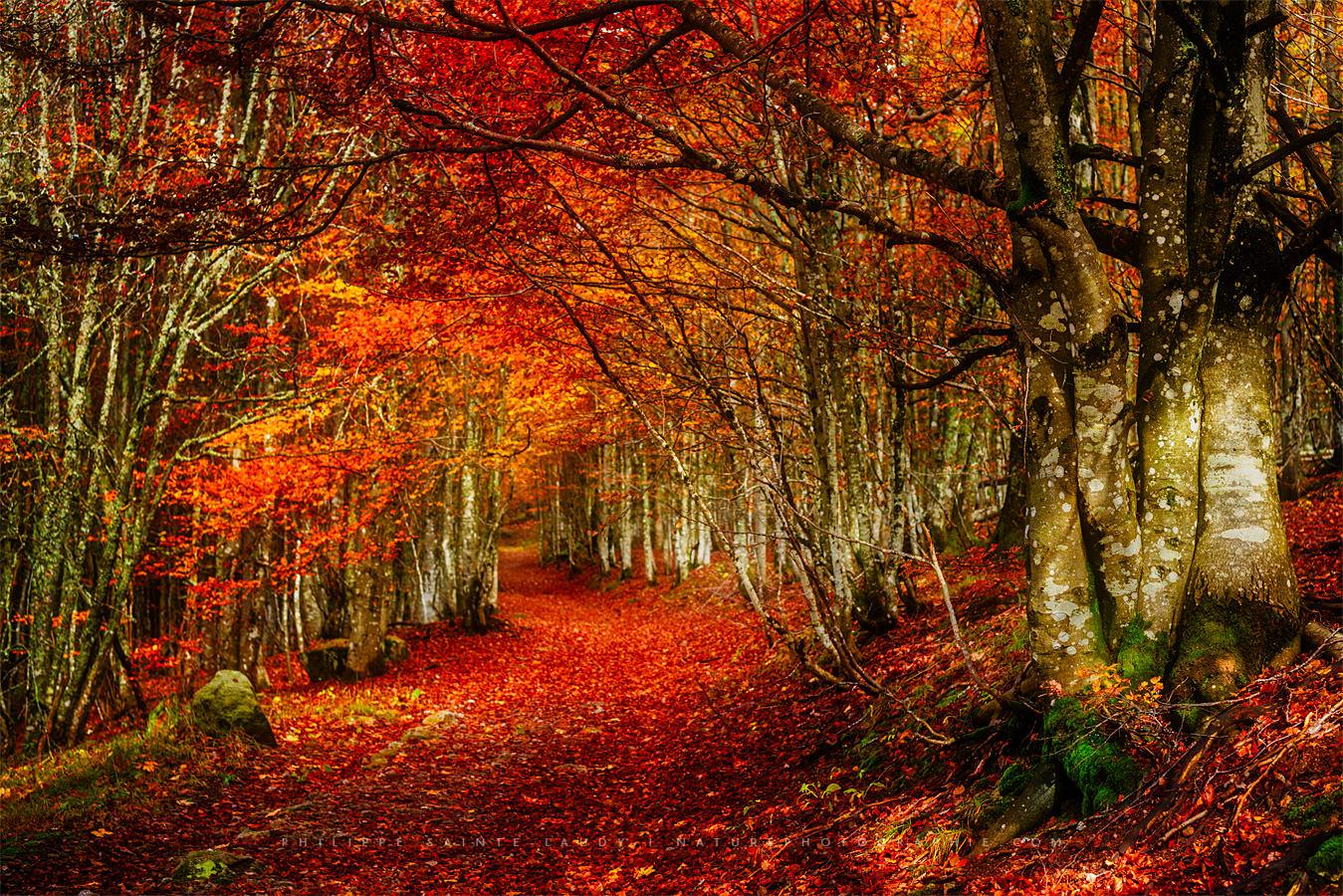 Effet Orton sur une forêt en automne