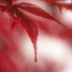 Photos de feuilles en automne