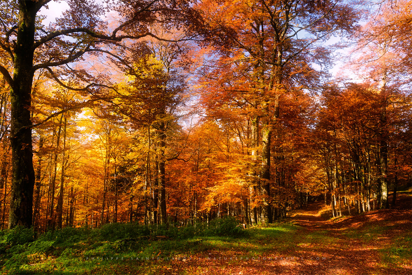 The Multicolored Forest