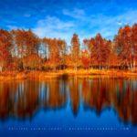Reflet d'une forêt en automne - 1000 Étangs