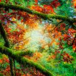 Le soleil traverse les branches d'un arbre en automne