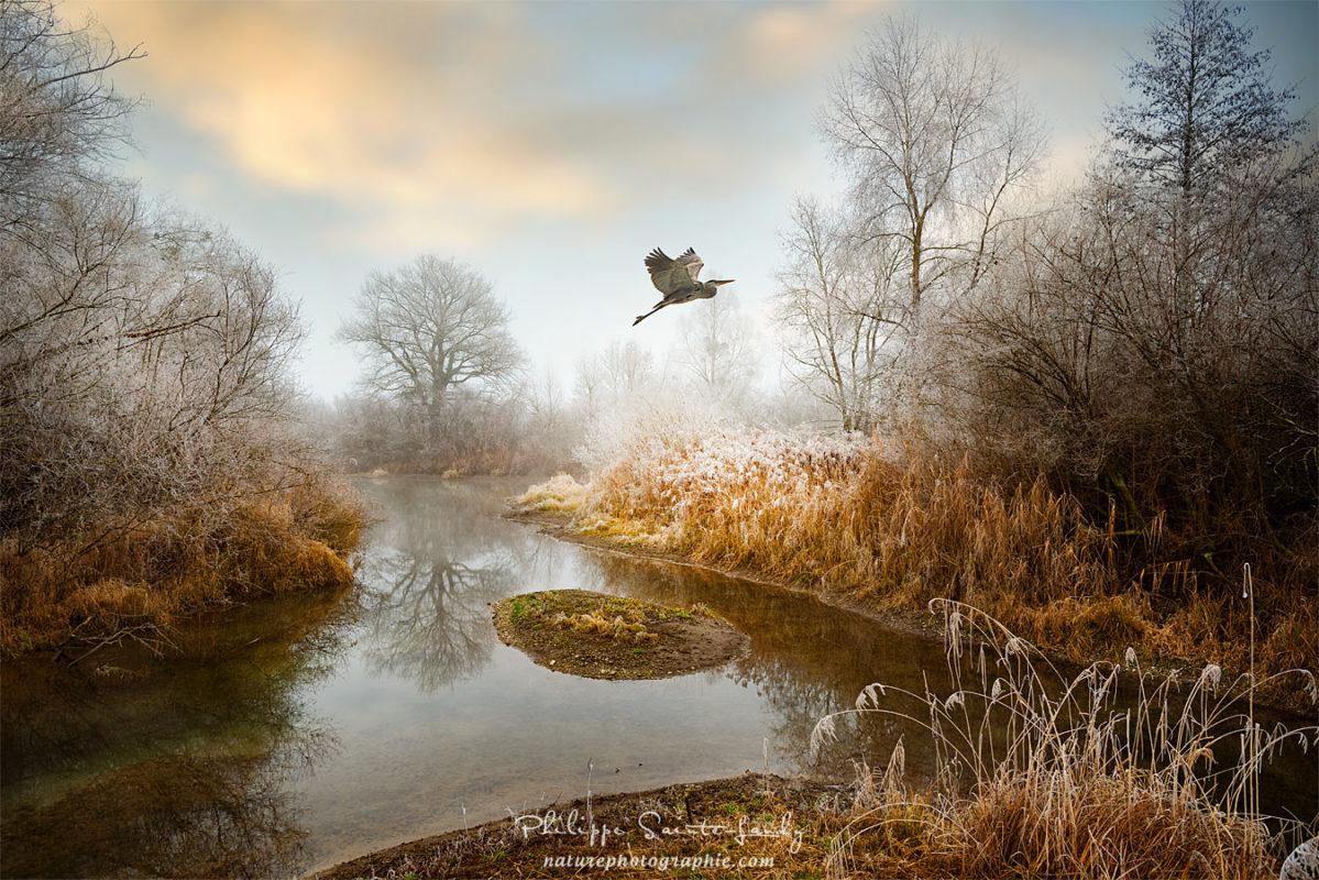 Un héron s'envole dans la campagne en hiver