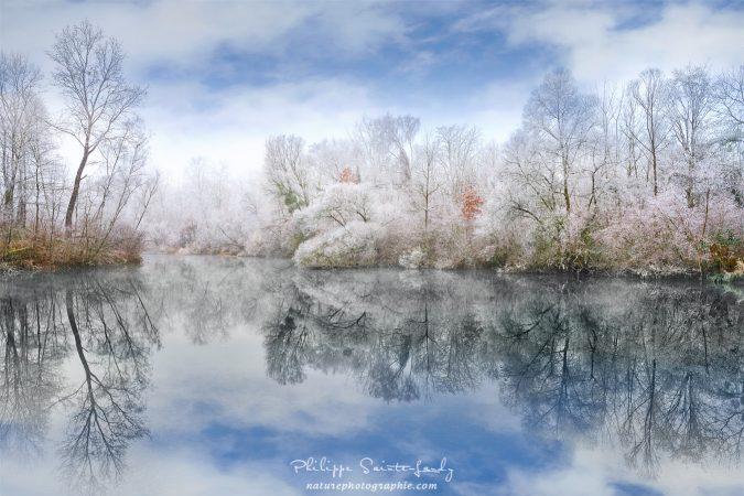Reflet d'une forêt au bord de l'eau en hiver