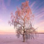 Ciel d'hiver à Oulu en Finlande