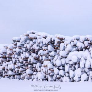 Troncs d'arbres sous la neige en Finlande