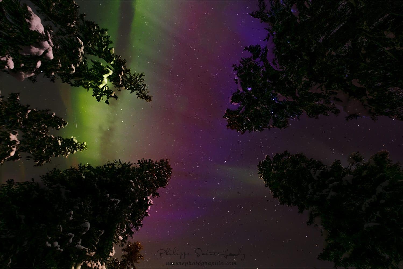 Evening of Auroras