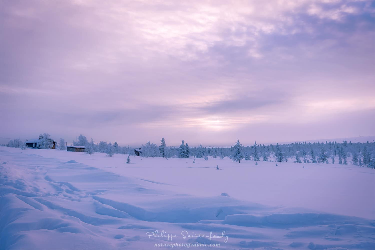 One morning in Lapland