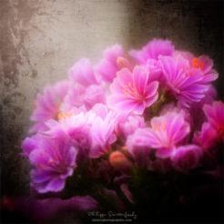 Fleurs et textures