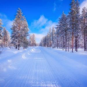 Forêt Finlandaise en hiver