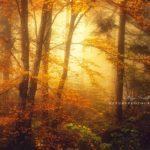 Forêt jaune en automne