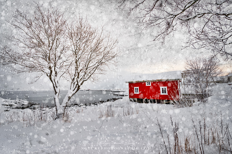 Winter Secret