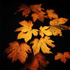 Premières photos d'automne