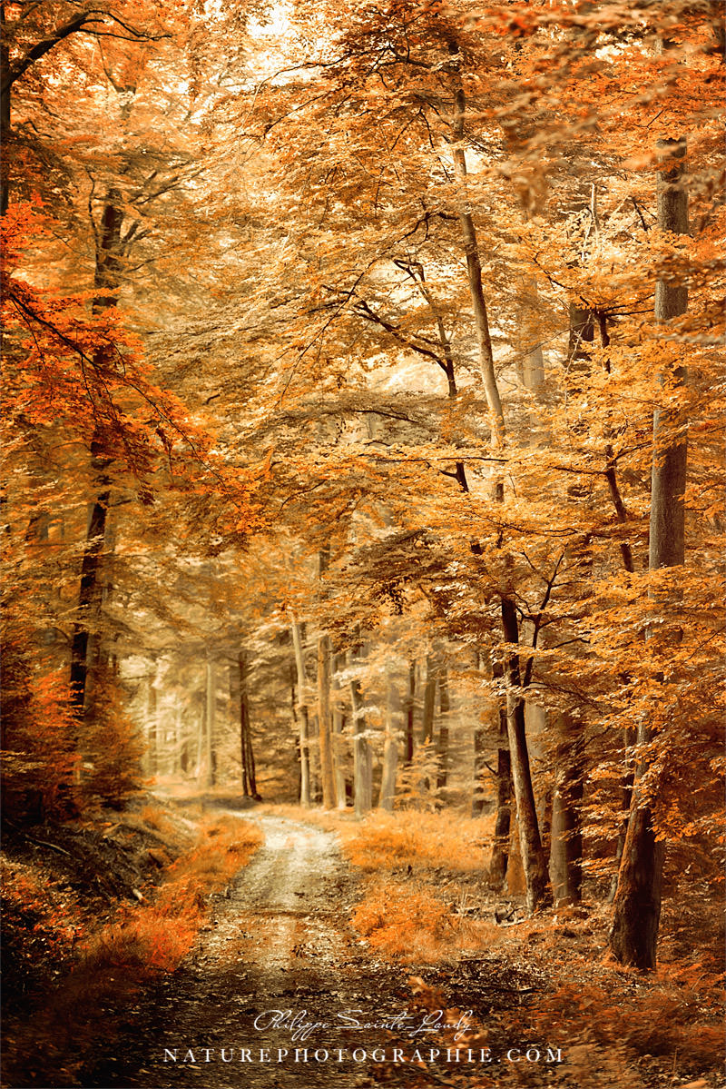 Autumn Secret