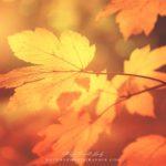 Feuille jaune en automne