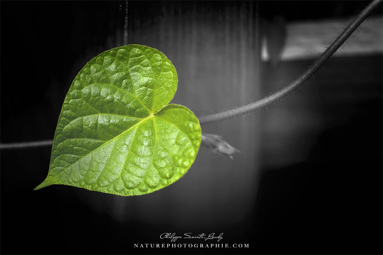 Coeur de Vert