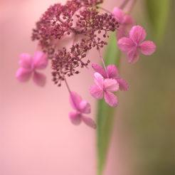 Des fleurs pour commencer la semaine