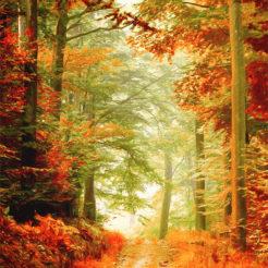 Sur les chemins de l'automne