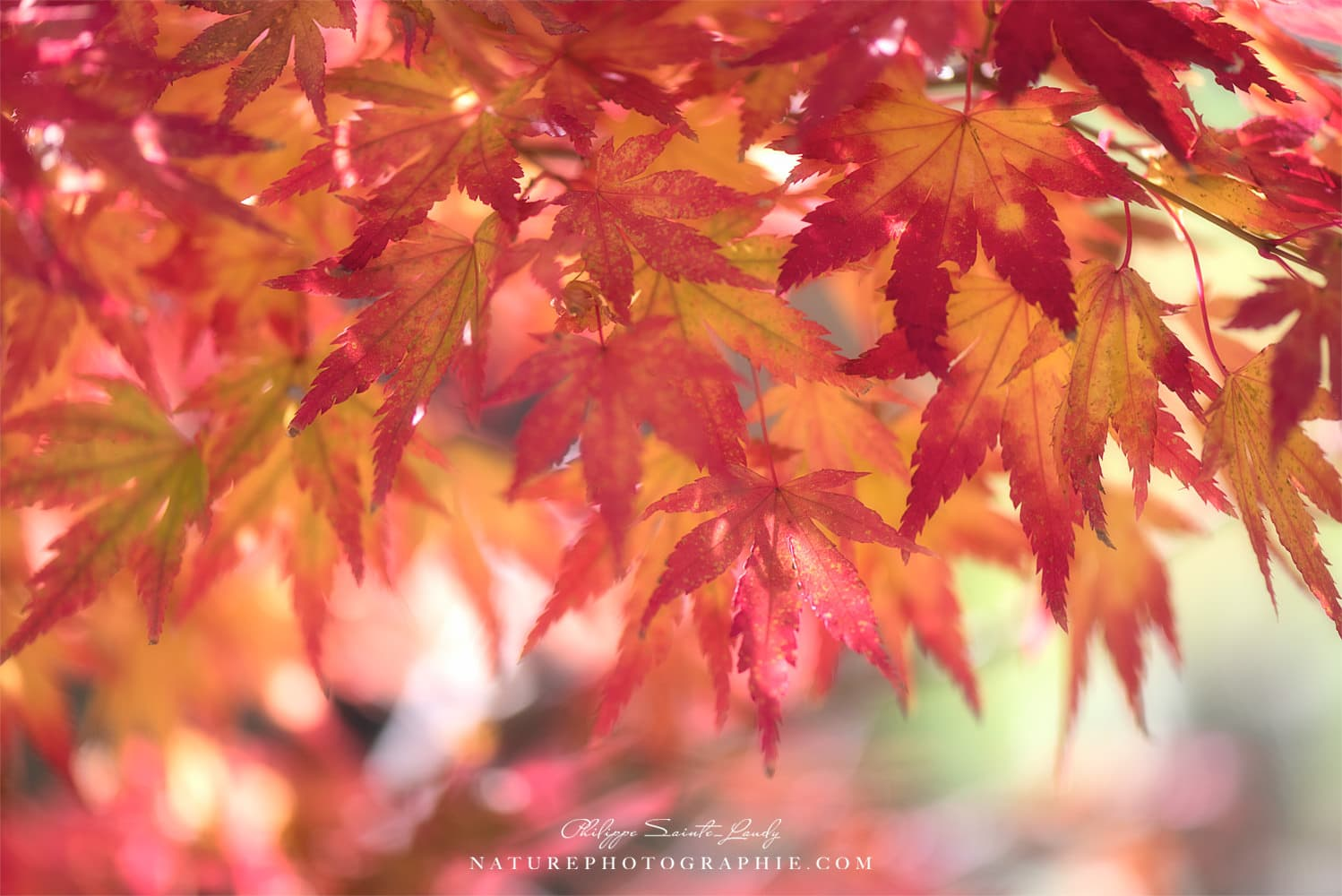 Curtain Of Autumn Leaves