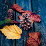 Composition automnale avec feuilles et pommes de pins