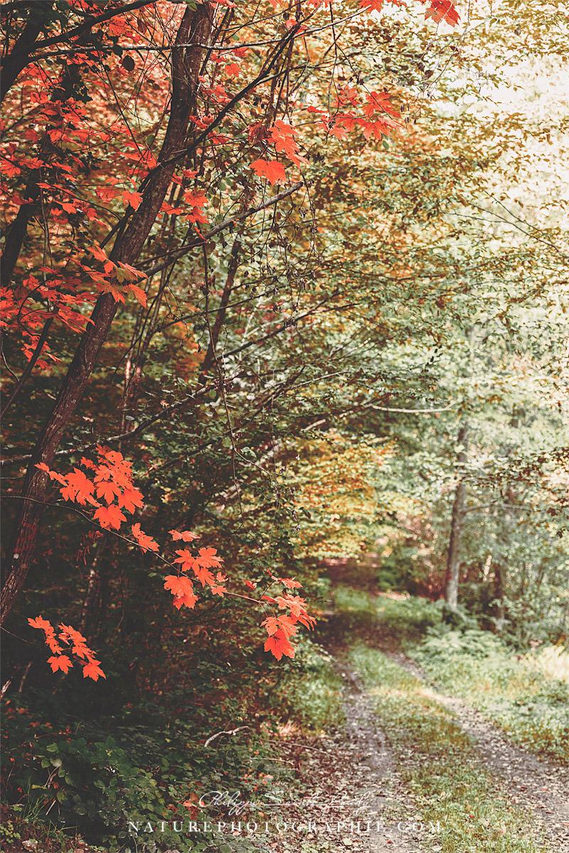 L automne et ses couleurs naturephotographie - L automne et ses couleurs ...