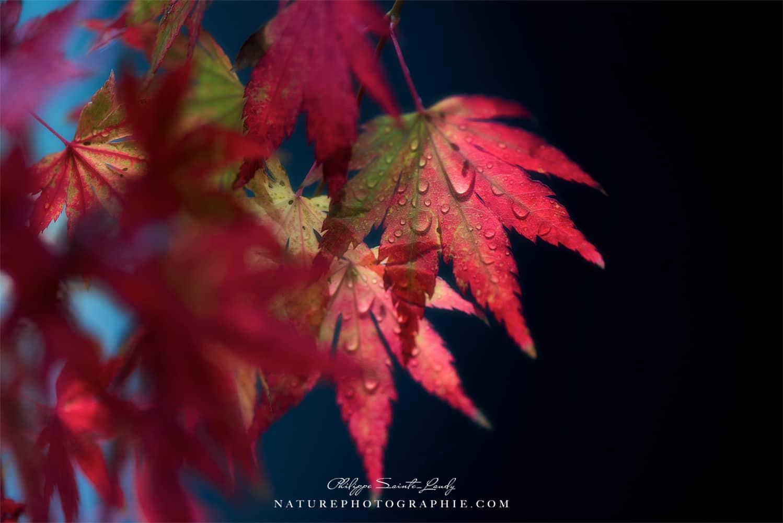 PHOTOGRAPHIES - FINE ART