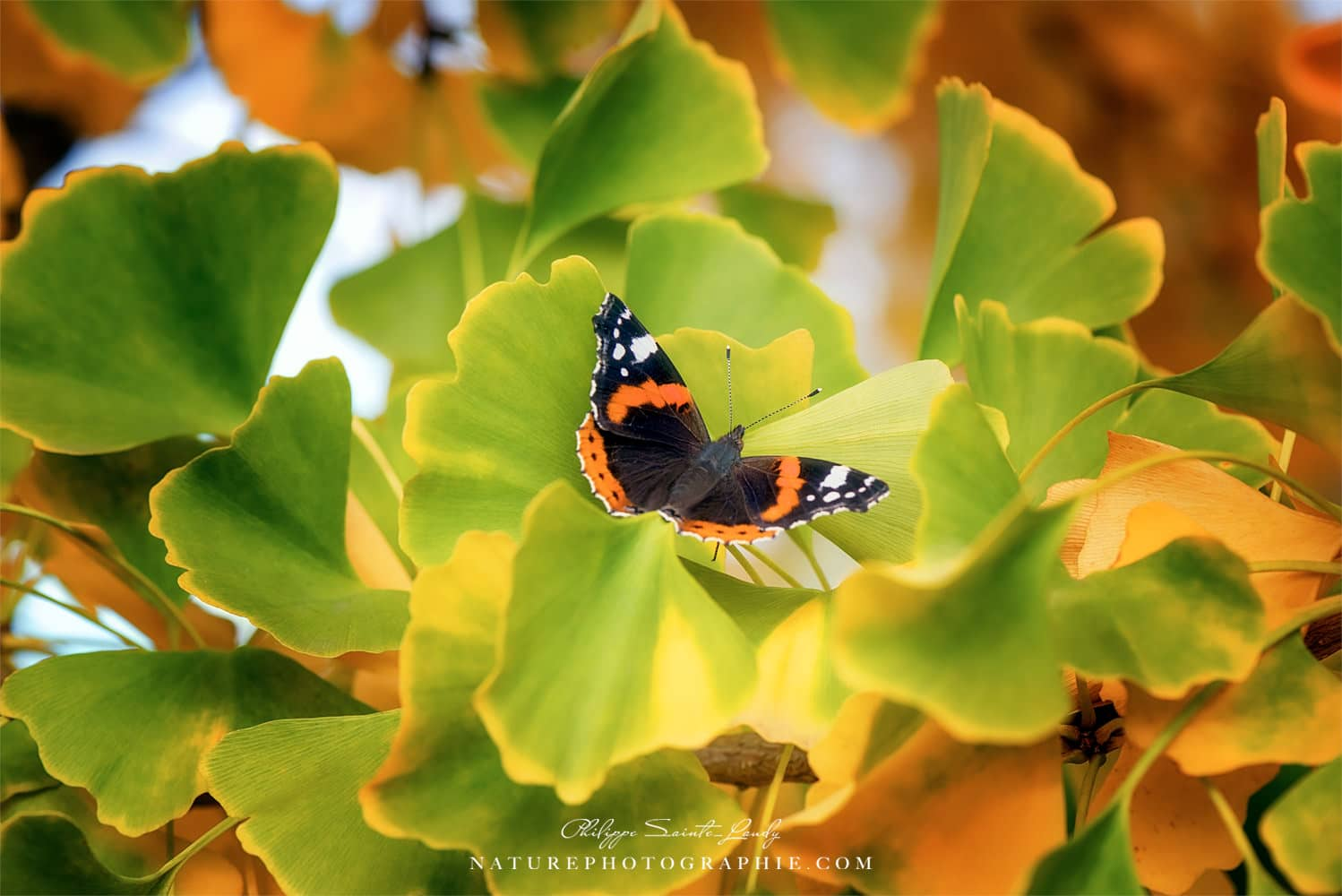 The Butterfly Who Loved Ginkgo