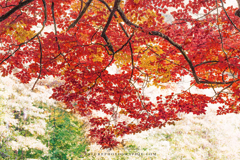 5 conseils sur la photographie de paysages - L automne et ses couleurs ...