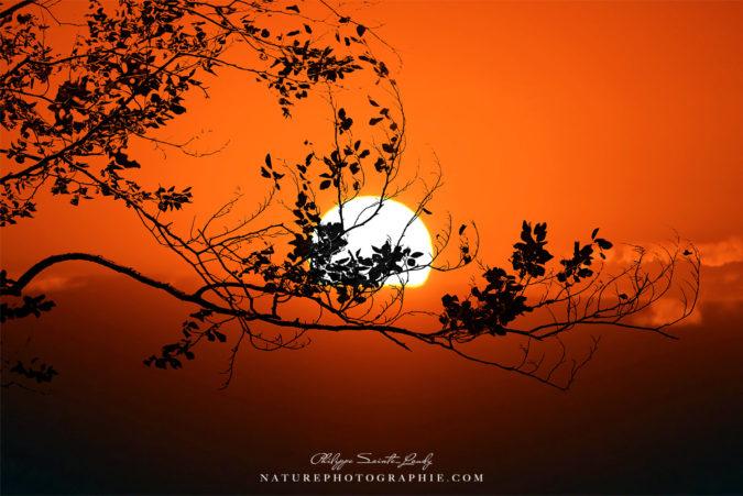 Coucher de soleil avec un arbre en contre-jour