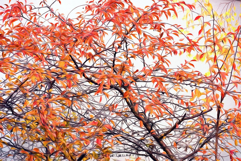 paintography sur un arbre en automne