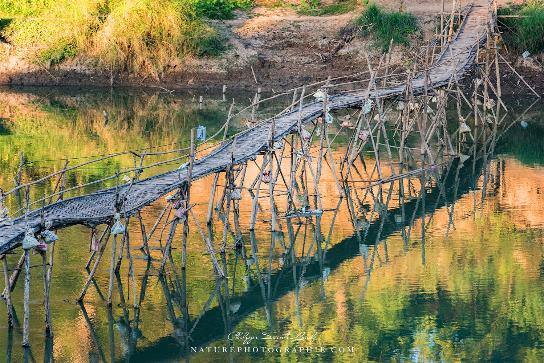 Bamboo Bridge