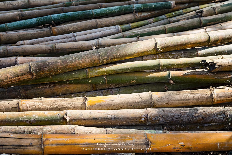 Bamboo Waiting