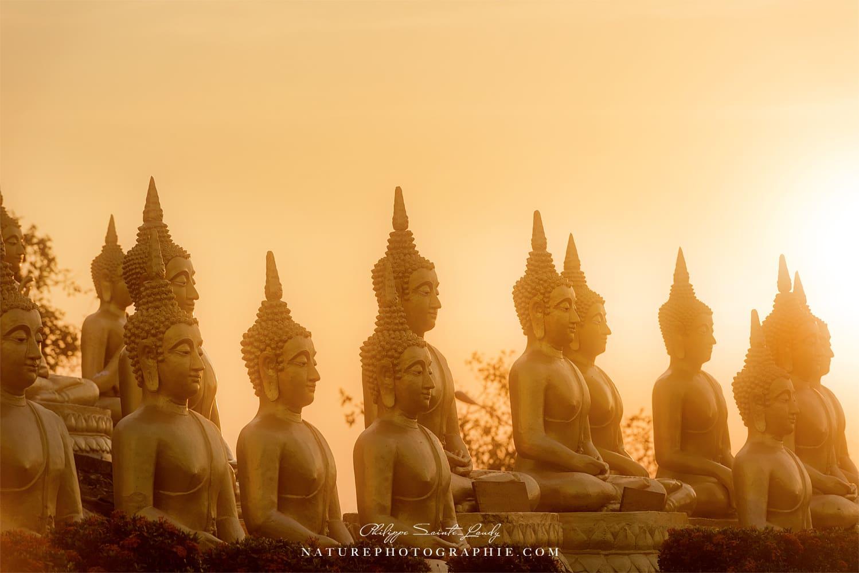 Buddhas in the Light - Paksé