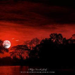 Vision personnelle d'une nuit au Laos