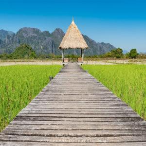 Ponton au milieu des rizières