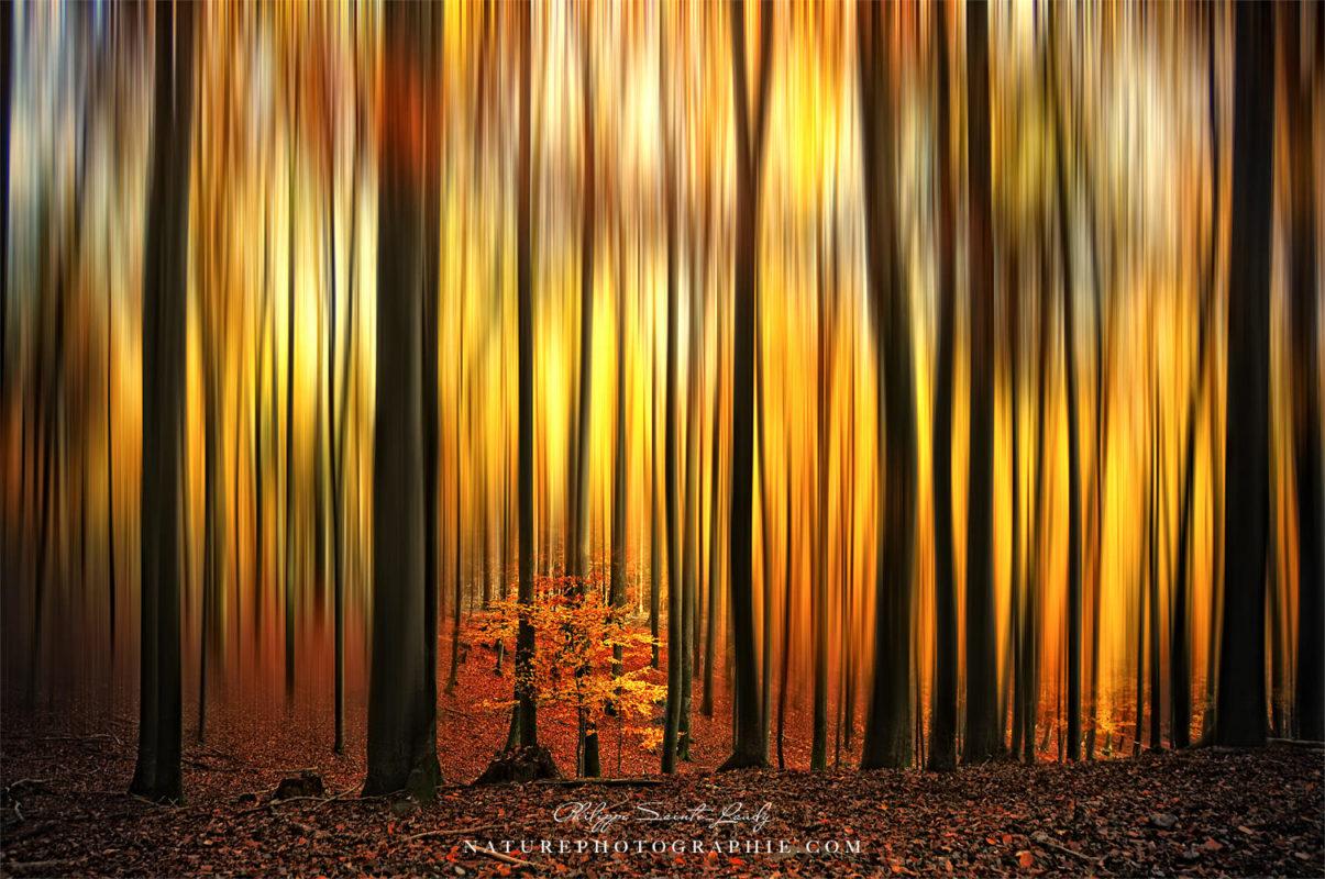 Flou directionnel sur une forêt en automne