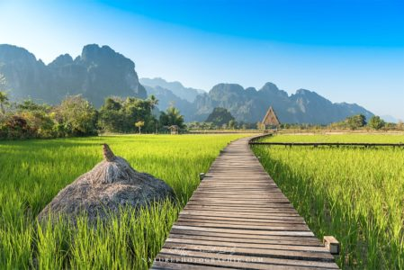 Au milieu des rizières de Vang Vieng