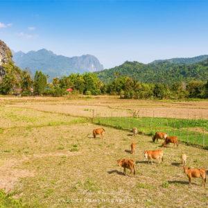 Campagne et rizières au Laos