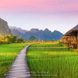 Rizière verte à Vang Vieng au Laos