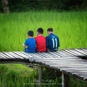 Enfant au Laos au bord d'une rizière