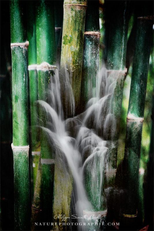 Wet bamboos